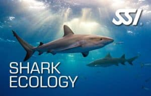 Shark Ecology Specialty Dive Course